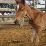 /home/saveahorse.giveeasy.org/public_html/wp-content/uploads/2016/11/foal.jpg