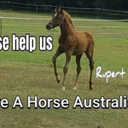 /home/saveahorse.giveeasy.org/public_html/wp-content/uploads/2017/03/17361126_10154415535467584_1346021320_n.jpg