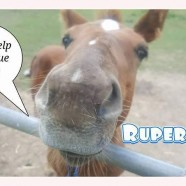 /home/saveahorse.giveeasy.org/public_html/wp-content/uploads/2017/05/ruper.jpg